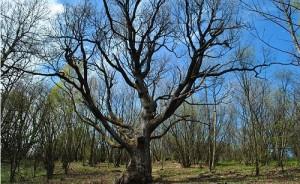 tree-592627_640