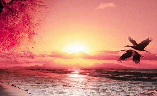 tramonto della vita