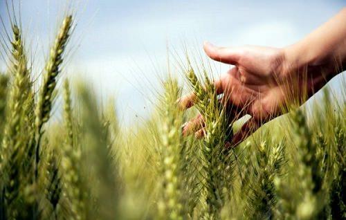 harvest-600x399